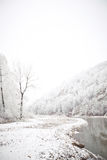 Gebirgsfluss und Wald nach Schneefällen Stockfotografie