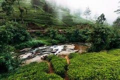 Gebirgsfluss unter Teeplantagen Große Teeplantage Grüner Tee in den Bergen Beschaffenheit von Sri Lanka Tee in Sri Lanka Grün lizenzfreie stockbilder