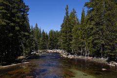 Gebirgsfluss zwischen grüne Baum-blauem Himmel Lizenzfreies Stockbild