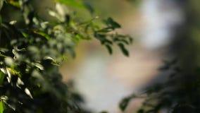 Gebirgsflussbaum-Steinwasserstrom stock footage