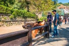 Gebirgshölle Yama Jigokuor in Beppu, Oita, Japan Stockbild