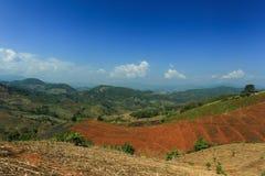Gebirgshimmel-Landschaftsblume Stockbild