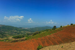 Gebirgshimmel-Landschaftsblume Lizenzfreie Stockfotografie