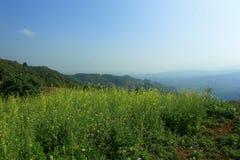 Gebirgshimmel-Landschaftsblume Lizenzfreie Stockbilder