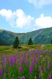 Gebirgshintergrund, Tatra-Berge, Polen Stockfotos
