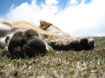 Gebirgshund in Uttarkashi, Uttarakhand, Indien Stockfotos