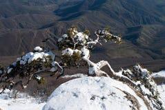Gebirgskiefer auf Bruch über einem Tal Stockfotografie