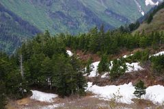 Gebirgskoniferenwald am Berg Roberts, Juneau, Alaska Lizenzfreie Stockfotografie