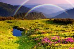 Gebirgslandschaft mit Blumen und einem Regenbogen Stockfoto