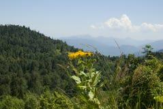 Gebirgslandschaft mit grünem Wald. Lizenzfreies Stockfoto