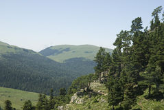 Gebirgslandschaft mit grünem Wald. Agygea Stockfoto