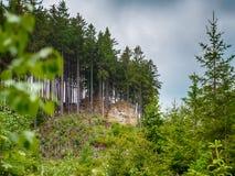 Gebirgslandschaft mit Kiefern Lizenzfreies Stockbild