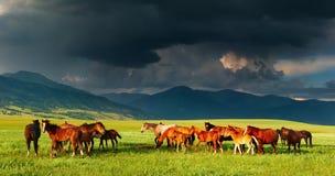 Gebirgslandschaft mit Pferden Stockfotos