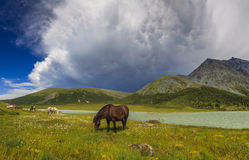 Gebirgslandschaft mit Pferden Lizenzfreie Stockbilder
