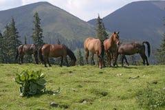 Gebirgslandschaft mit Pferden Stockfoto