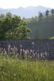 Gebirgslandschaft mit roten Blumen I Lizenzfreies Stockfoto