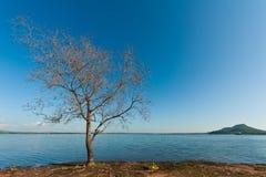 Gebirgslandschaft mit See und totem Baum Stockbild