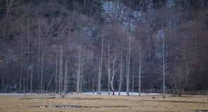Gebirgslandschaft in Nikko, Japan Lizenzfreie Stockfotografie