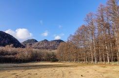 Gebirgslandschaft in Nikko, Japan Stockbild