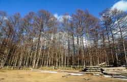Gebirgslandschaft in Nikko, Japan Lizenzfreie Stockfotos