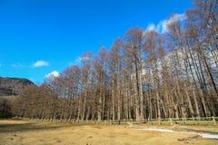 Gebirgslandschaft in Nikko, Japan Stockbilder