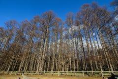 Gebirgslandschaft in Nikko, Japan Lizenzfreies Stockbild