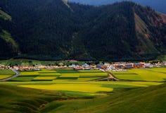 Gebirgslandschaft Qinghais Qilian Zhuoer und Coleblumen Stockfotos