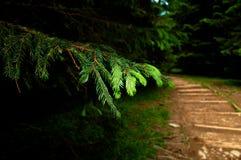 Gebirgspfad an der Mitte des Waldes Stockbilder