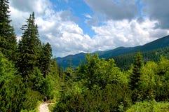 Gebirgspfad am Rand des Waldes Lizenzfreies Stockbild