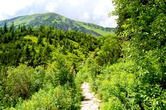Gebirgspfad am Rand des Waldes Stockbilder