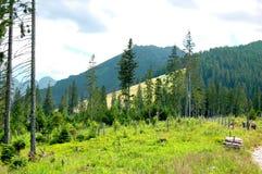 Gebirgspfad am Rand des Waldes Lizenzfreies Stockfoto
