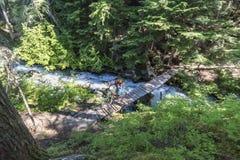 Gebirgsradfahrender Pfeifer Kanada Lizenzfreies Stockfoto