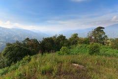Gebirgsregenwälder Stockfotos