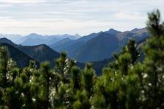 Gebirgsschattenbilder mit Wald und bewölktem Himmel stockfotografie