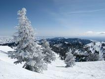Gebirgsschnee-Baum Stockfoto
