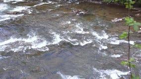 Gebirgsschneller Flussstrom Flacher Gebirgsfluss mit Steinstromschnellen stock video footage