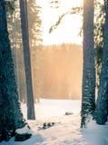 Gebirgsskis bei Sonnenuntergang im schneebedeckten Wald Stockfotos