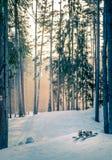 Gebirgsskis bei Sonnenuntergang im schneebedeckten Wald Stockfotografie