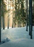 Gebirgsskis bei Sonnenuntergang im schneebedeckten Wald Stockbilder