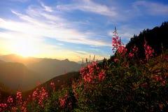 Gebirgssonnenuntergang und hintergrundbeleuchtete wilde Blumen Stockfotografie