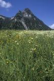 Gebirgsspitze und grüne Wiese Stockbilder