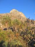 Gebirgsspitze und Palme Stockbild