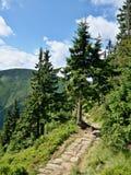Gebirgssteinfußweg mit Bäumen Stockfoto