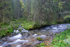 Gebirgsströme im Wald Stockfotos