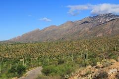 Gebirgsstraße in der Bärn-Schlucht in Tucson, AZ stockfotos