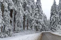 Gebirgsstraße durch Wald im Winter. Stockfoto