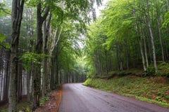 Gebirgsstraße innerhalb eines Waldes 2 Stockfotos