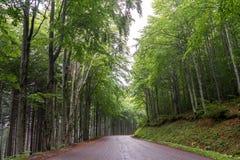 Gebirgsstraße innerhalb eines Waldes Stockfoto