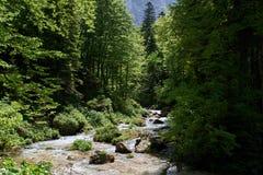 Gebirgsstrom in einem grünen Wald mit schönem Rollen lizenzfreie stockbilder