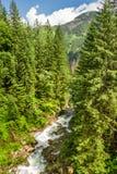 Gebirgsstrom in einem Wald Stockbild